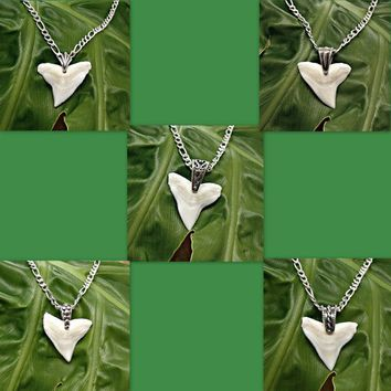 "Bull Shark Tooth 1 Inch 25mm Necklace Pendant on Sterling Silver Figaro 080 Chain 16"", 18"", 20"", 24"", 30"" Sharks Teeth"