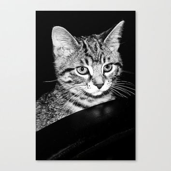 Cute Kitty feline fine art black and white photography wall decor home accent kitten tabby cat portrait pet gifts under 50