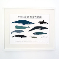 Whales of the World print by katebroughton on Etsy