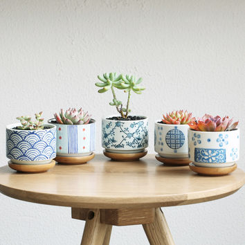 """""""Graphic"""" planters with bamboo trays"""