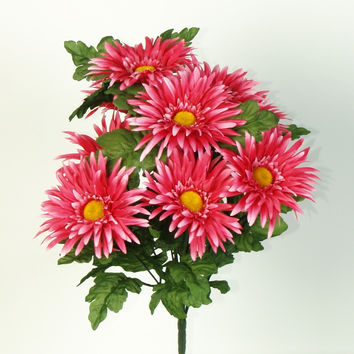 Gerbera Daisy Bush - Pink  BLOW OUT SALE !!
