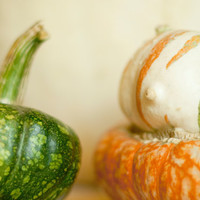 Fine Art Photo Print - Autumn Rustic Country Pumpkin Fall Nursery Kitchen Wall Art Home Decor - 8 x 10