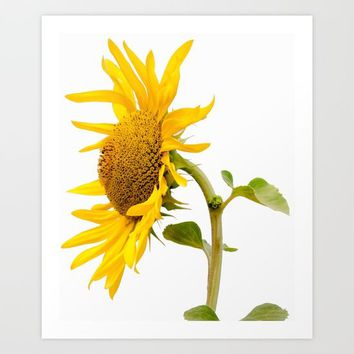 sunflower Art Print by anabprego
