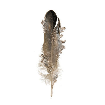 Crystal Feather Signed Print | Art | Photograph |