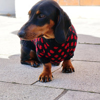 Dog Clothes Polka Dots Red Dachshund Sweater Dog Clothes Doxie Clothes Dog sweater Dachshund coat Dog coat Clothes for pet Dog costume
