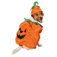 Petco Halloween Pumpkin Dog Costume