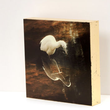 """Egret Wildlife Wall Panel - 8x8 Photo Standout, Handmade Wall Art, Brown, Tan, Copper Wall Decor, fine art photography """"Into the Cosmos"""""""