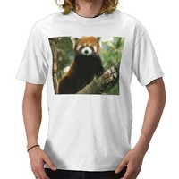 Red Panda Tee Shirts from Zazzle.com