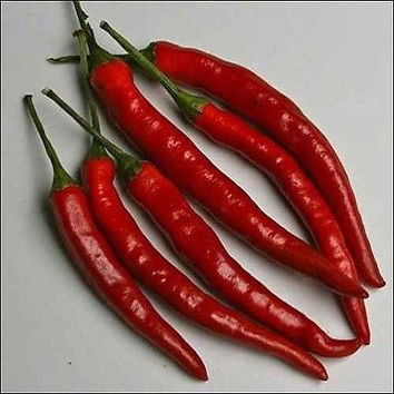 Pepper Cayenne Long Red Vegetable Seeds (Capsicum annuum) 100+Seeds