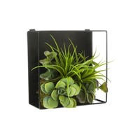 Threshold Faux Succulent and Air Plant Shadow Box 3.5x8x8""