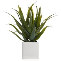 Aloe Plant | Mothers-day | Z Gallerie