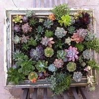 DIY Framed Hanging Succulent Garden | Shelterness