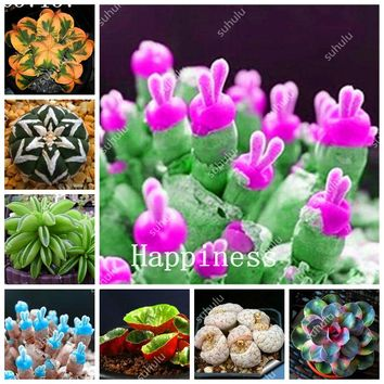 100 Pcs Rare Succulent Mini Cactus Seedling Bonsai Perennial Herb Pot Flower Indoor Planta For Home Garden Decor Flesh De Flores
