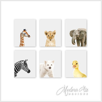Baby Animal Prints, Animal Nursery Art Prints, Zoo Animals, Jungle Nursery Decor, Safari Nursery Art, Baby Animal Prints, Safari Nursery