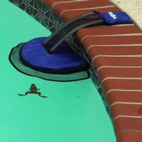 The FrogLog Swimming Pool Escape Ramp Device| Rescue Small Animals from Drowning
