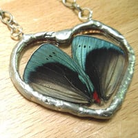 Real Butterfly Wing Pendant  Charles Darwin by workofwhimsy
