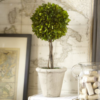 Birch Lane Preserved Boxwood Topiary, Single Ball