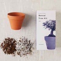 Miniature Indoor Bonsai Tree