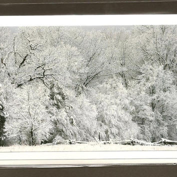 First Snow Fall Fresh Snow on Trees Nature Photography on Blank Note Card Winter Hush