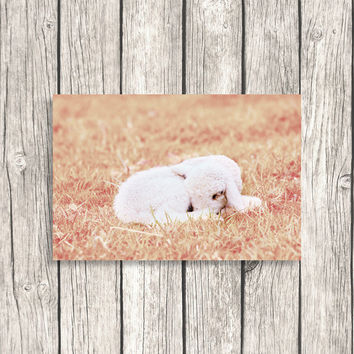 Cute Lamb Photograph - Nursery Art - Pastel Pink Home Decor -  Kids Room Decoration - Printable Digital Photo Download