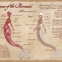 Anatomy of the Mermaid // Art Print // Scientific Illustration // Medical Chart // Fantasty Art // Offbeat Home Decor