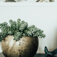 HOME: Global Crackle Planter in Brass Medium