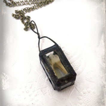 Deer Tooth Necklace Soldered Glass Reliquary Necklace, Animal Teeth Jewelry,Bone Jewelry, Unusual Necklace, Tooth Specimen, Glass Box Shrine