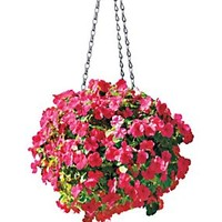 Hanging Ball Planter - SmartMoss | Solutions