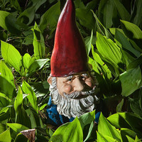 Garden Gnome 065  A Fine Art Photograph by RandyNyhofPhotos