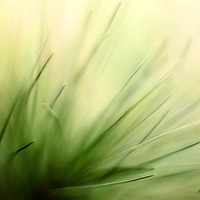Nature photography wall decor abstract photography wall art fine art photography fine art print green spring home decor pine art photo