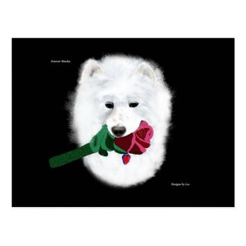 Samoyed PostCard