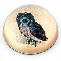 Owl Glass Dome Desk Paperweight by Albrecht Durer 3W