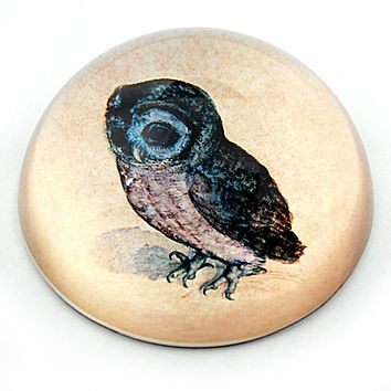 Owl Drawing Glass Dome Desk Paperweight by Albrecht Durer 3W
