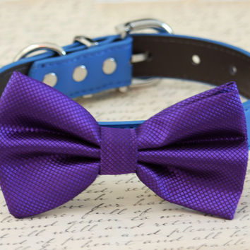 Blue and Purple dog bow tie, pet wedding, dog birthday, blue purple wedding