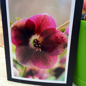 "Blank card , original photography, 4x6"" , Flowers"