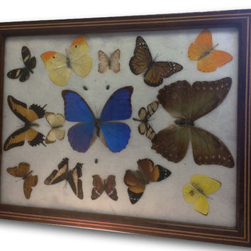 Vintage Pressed Butterflies Beetles Specimens  Inlaid Wood Servin Tray