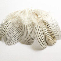 Feathers Silver Pheasant | Jewelry Making feathers | Millinery Jewelry Crafts supplies| Hair accessories Natural Feathers FA59