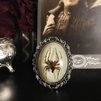 Victorian Spider Brooch, Taxidermy, Insect Jewelry, Real Spider, Spider Jewelry, Victorian, Memento Mori, Gothic Jewelry