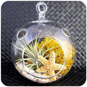Under The Sea : Hanging Air Plant Glass Terrarium - Tillandsia Golden Moss Starfish Decor Kit Thank You Housewarming Birthday Gift