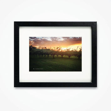 Framed photography of Oxfordshire Apple Orchard trees sunset Upton cider print