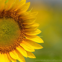 Sunflower portrait, yellow and green, gifts for her, 8x10 photograph, botanical print,