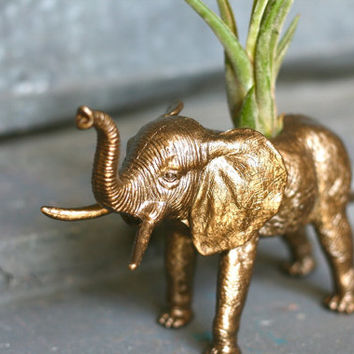 Large ELEPHANT Planter Bronze Ele-plant with Large Air Plant
