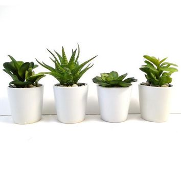 Green Succulent Plant In Ceramic Pot | Dunelm