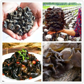 100 Pcs Delicious Green Vegetable Black Mushroom Seed Organic Vegetable Seed Bonsai Plant in Garden and Courtyard for Health