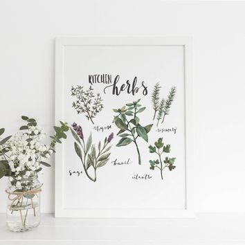 Kitchen Culinary Herbs Art Print