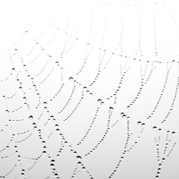 "Spiders web - dew drops - Black and white photography - nature photo white pale gray minimal lines geometric abstract photograph ""Woven"""