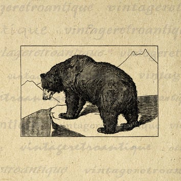 Grizzly Bear Illustration Printable Image Graphic Download Digital Vintage Clip Art for Transfers Making Prints etc HQ 300dpi No.2633