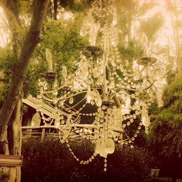 11x14 photograph  Forest of Dreams  fine art by maybesparrowsplace