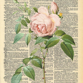 Vintage Rose Dictionary Art Print