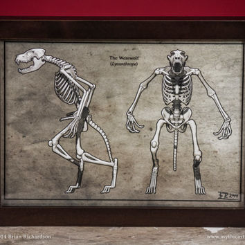 Werewolf Skeleton Faux-Scientific Print